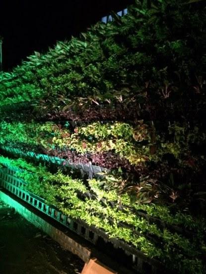 Trồng cây trên tường thẳng đứng! Giải pháp vừa chống nóng vừa làm đẹp cho nhà phố 3