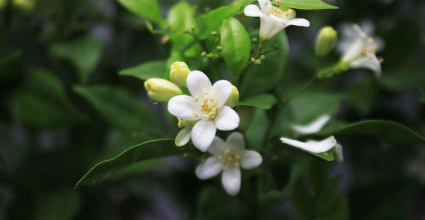 5 loại cây hoa nở quanh năm 1